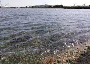 横浜の潮干狩り